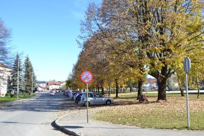 Дрворед липа испред општинске управе