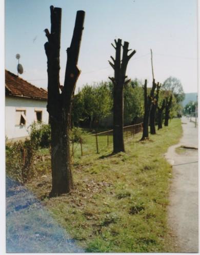 Окресани дрворед липа