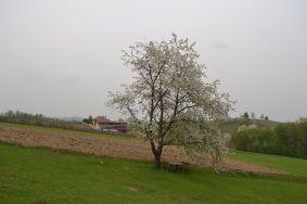 19 markovac 1
